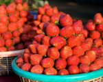panchgani-strawberries