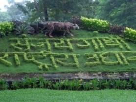 p-1794-Mumbai-Sanjay-Gandhi-National-Park