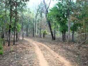 p-2043-chandrapur-forest-300