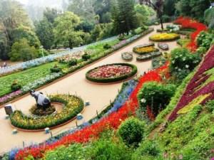 p-2479-chandigarh-zakir-hussain-rose-garden-300