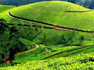ooty-featured